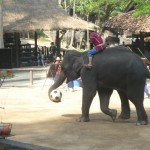Chiang Mai Thailand Elephant with Soccer Ball