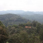Paradise Mountain Coffee Farm Hills