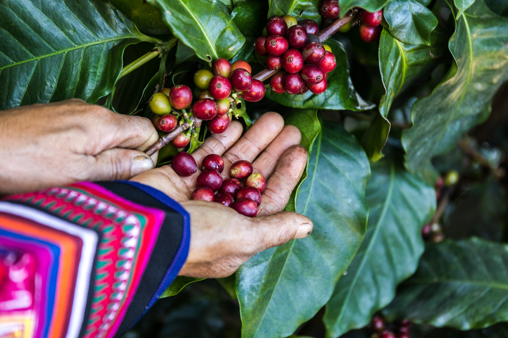 image of History of the Fair Trade Coffee Movement